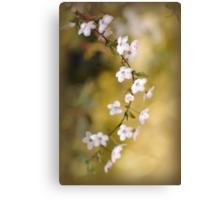 Soft on Spring Canvas Print