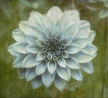 The Bloom is Greening by Steve Walser