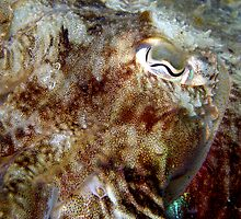 Cuttle Fish Close Up by Marcus Grant IPA
