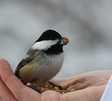 A Bird in the Hand by Alyce Taylor