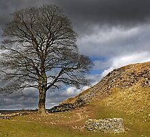 Sycamore Gap, Hadrian's Wall Northumberland National Park by Martin Lawrence