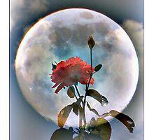 Moon Flower Photographic Print