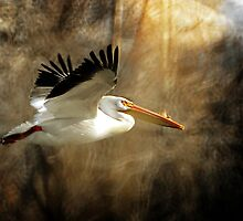 American White Pelican - Flight by Ryan Houston