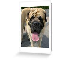 Neapolitan Mastiff dog Greeting Card