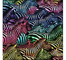 Rainbow Zebras Photographic Print