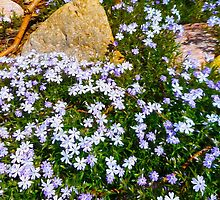 Spring Purple flowers, floral art, impressionism by artbykatsy