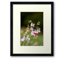 Mary, Mary... Framed Print