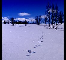 Traces in the snow by BartoCreations