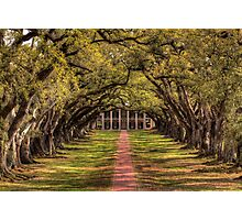 Oak Alley Photographic Print