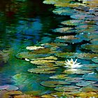 Dreamy Lily Pond by Darlene Lankford Honeycutt