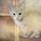 Kitty in the window by vigor