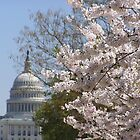 Government in Bloom by Megan Evorik