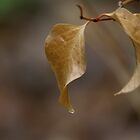 Autumn leaves 01 by ImagesbyChris