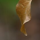 Autumn leaves 03 by ImagesbyChris