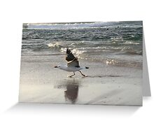 Pacific gull (Larus pacificus) Greeting Card