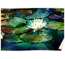 White Water Lily Impression Poster