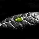 go green by Susanne Correa