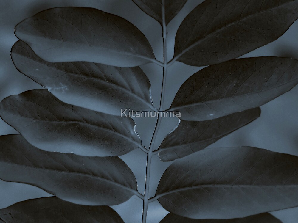 Black & Blue by Kitsmumma