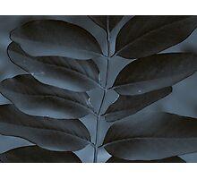 Black & Blue Photographic Print