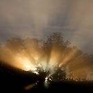 Sun Beams by Norman Winkworth