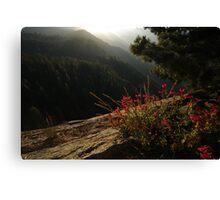Moro Rock Flower View Canvas Print