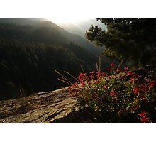 Moro Rock Flower View Photographic Print