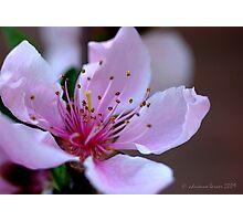 Springtide Photographic Print