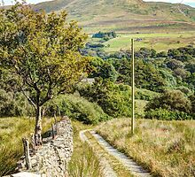 A lane in Wales by Anthony Hedger Photography