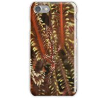 Ghost Pipe Fish iPhone Case/Skin