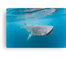 Whale Shark Profile Canvas Print