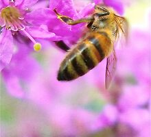 Wasp collecting pollen from pink flowers by AlisonBurford