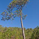 Tree by Naomi Brooks