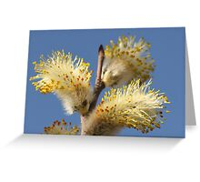 Pussy Willow and Blue Sky Greeting Card