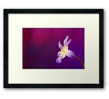 In a Purple World..... Framed Print