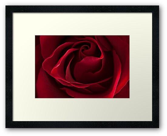Dark Red Rose by AnnieD