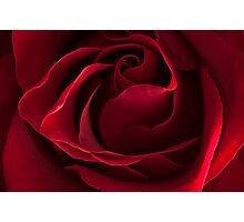 Dark Red Rose Photographic Print