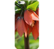 Orange Crown imperial iPhone Case/Skin
