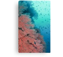 Wall of Sea Fans Canvas Print