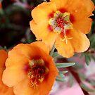 Orange Frenzy by Susan van Zyl
