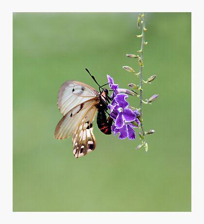 """Sheer Magic"" Photographic Print"