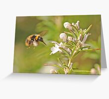 Coming in for Nectar Greeting Card