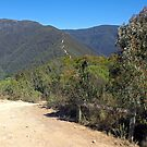 Victorian Alpine NP - Billy Goat Bluff track by George Petrovsky