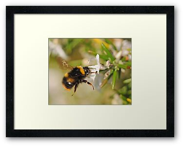 Hovering Bumblebee by Richard Heeks