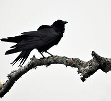 Bye Bye Black Bird by Poete100