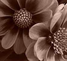Sepia Flowers by Mike Thomson