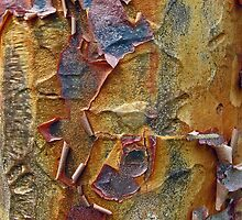 Paper Bark Abstract by Jessica Jenney