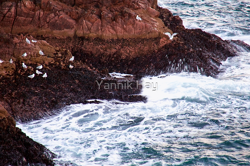 Gulls Rockliffe at Sunset, Slains Castle  (North Sea, Cruden Bay, Aberdeenshire, Scotland) by Yannik Hay