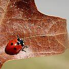 Ladybug by Tamara Brandy