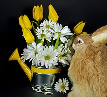 Sniffing Spring by Maria Dryfhout
