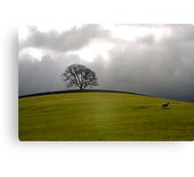 The sheep and the tree Canvas Print